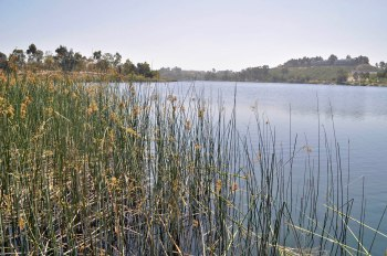 With a capacity of 6,682.4 acre-feet, Miramar Reservoir (and adjacent water treatment plant) serves residents in the northern portion of the city.