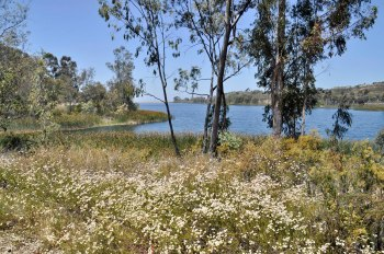 Another view of Miramar Reservoir. Click images to enlarge.