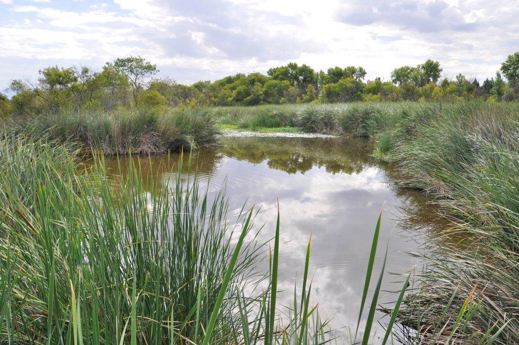 San Diego River at Santee's Mast Park