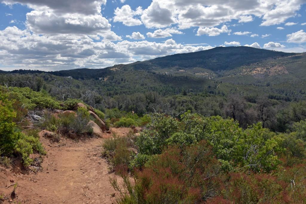 Along the Canyon Oak Trail.